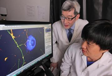 Weill Cornell Medicine Psychiatry Basic and Translational Research